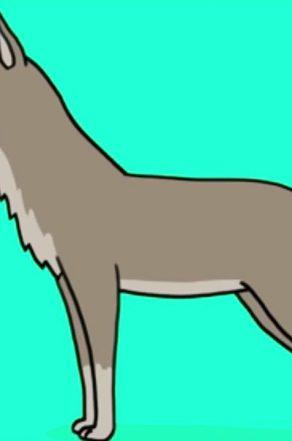 Comment dessiner un loup ?